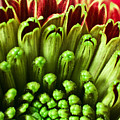 Macro Flower by Svetlana Sewell