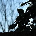 Macro On Leaves by Alireza Khoddam