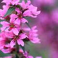 Macro Purple Flower by Angela Murdock