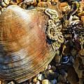 Macro Shell by Paul Cummings