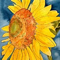Macro Sunflower Art by Derek Mccrea