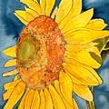 Macro Sunflower Art by Derek Mccrea