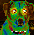 Mad Dog by Diane E Berry