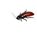 Madagascar Hissing Cockroach by Michael Ledray