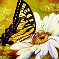 Madame Butterfly by Karen Dukes