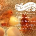 Made New - Verse by Anita Faye