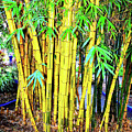 City Park Bamboo Grass by Wilf Doyle