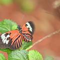 Madiera Butterflies by Olga Hamilton