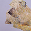 Madigan Wheaten Terrier by Amy Fissell