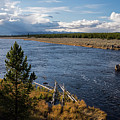 Madison River In Yellowstone National Park by Cindy Murphy - NightVisions