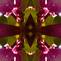 Magent Crystal Flower by Amy Vangsgard