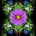 Magenta Daisy by Bruce Frank