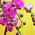 Magenta Orchid 3 by Ken Lerner
