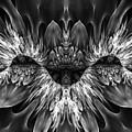 Magenta Until - Black And White 2 by Amorina Ashton