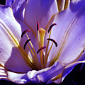 Magic Floral Poetry by Silva Wischeropp