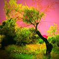 Magic Garden by Ingrid Dance