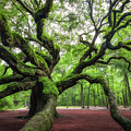 Magical Angel Oak Tree  by Michael Ver Sprill