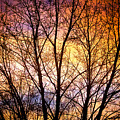 Magical Colorful Sunset Tree Silhouette by James BO Insogna
