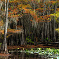 Magical Cypress Trees Forest by Iris Greenwell