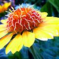 Magical Flower by Cynthia McCullough