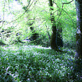 Magical Forest At Blarney Castle Ireland by Teresa Mucha