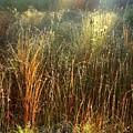 Magical Light On The Marsh by Carol Groenen