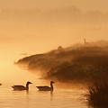 MAgical Misty  Morning by Roeselien Raimond