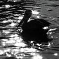 Magical Pelican by Peg Urban