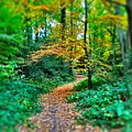 Magical Woodland Walk by Mo Barton