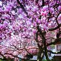 Magnificant Magnolias by Susan Savad