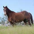 Magnificent Horse by Doris Potter
