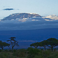 Magnificent Kilimanjaro by Michele Burgess