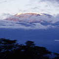 Magnificent Mount Kilimanjaro by Michele Burgess