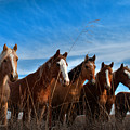 Magnificent Seven by Jolynn Reed