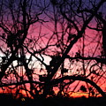 Magnificent Sunset And Trees by Nadine Rippelmeyer