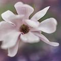 Magnolia #1  by Yancho Sabev