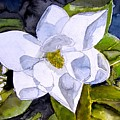 Magnolia 2 Flower Art by Derek Mccrea