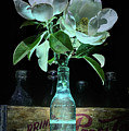 Magnolia And Pepsi Still Life by JC Findley