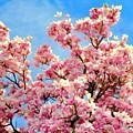 Magnolia Beauty #13 by Ed Weidman