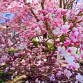 Magnolia Beauty #15 by Ed Weidman