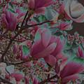 Magnolia Beauty by Vijay Sharon Govender