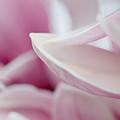 Magnolia Blossom by Jane Melgaard