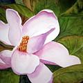 Magnolia Blossom by Julia RIETZ