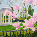 Magnolia Blossoms At Wagner Park by Linda Feinberg