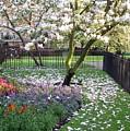 Magnolia by David L Griffin