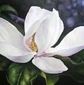 Magnolia Flower by Chris Hobel