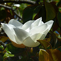 Magnolia Flower Chalice by Andrea Freeman
