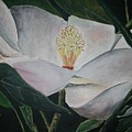 Magnolia Flower Oil Painting by Derek Mccrea