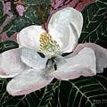 Magnolia Flower Painting by Derek Mccrea