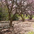 Magnolia Garden 7019 by Terri Winkler